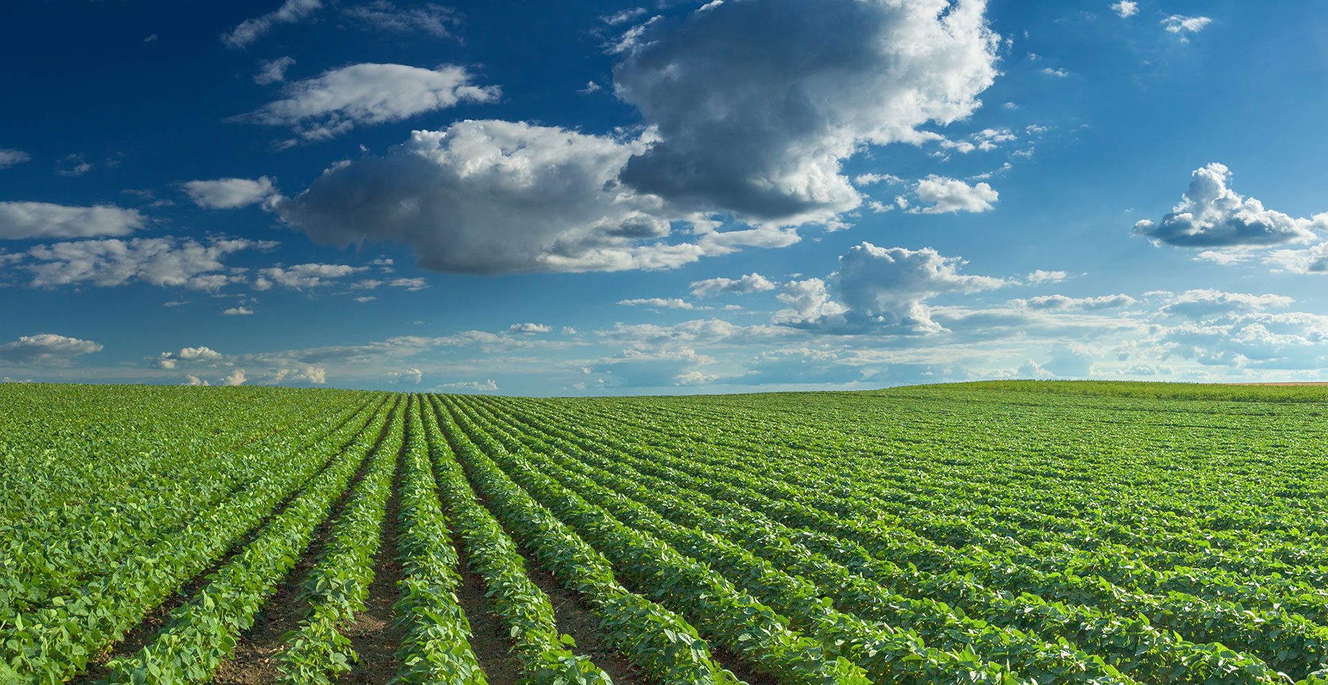 Agriculture, trade expected to boost ag industry   2019-09
